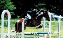 Gruppindelningen på ponny tas bort