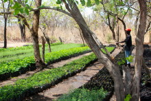 Länsförsäkringar Jönköping klimatkompenserar med trädplantering i Afrika genom klimattjänsten ZeroMission