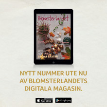 Nytt nummer av Blomsterlandets Digitala Magasin.