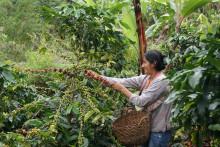 38 miljoner kronor extra till Fairtrade-bönder