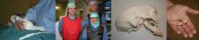 Akademiska först med elektrisk stimulering vid Hortons huvudvärk