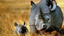 Rhino Force 8 E - en dag med aktiviteter till förmån för världens noshörningar på Göteborgs Naturhistoriska Museum.