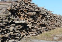 WWF kommenterar regeringens förslag till lag mot olagligt virke: Försenad lag saknar styrka för att bekämpa svartvirket