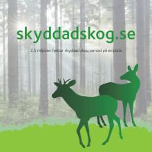 Skyddad skog