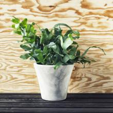 Trendväxter våren 2015 - trendiga grönväxter