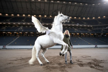 Sweden International Horse Show 2015