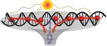 DNA bygger upp antenn för solenergi