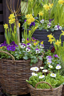 Blomsterlandet öppnar ny butik i Uppsala