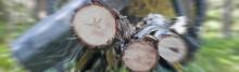 Dyrare biobränsle från skogen