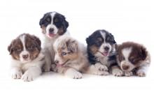 Ny bok om hundavel