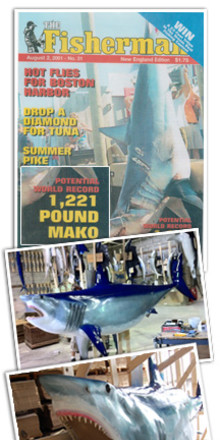 Gray Taxidermy chosen to reproduce the current IGFA World Record Mako Shark - Craftsmanship at its Best