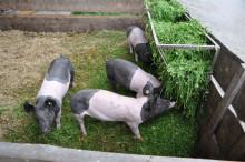 Menigo söker Sveriges mest nyskapande bonde.