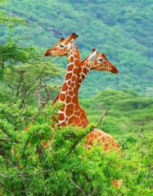 Sør Afrika med safari; Elvecruise på Göta kanal; Ukens cruisetilbud og spennende Kunnskapsreiser
