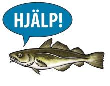 EU-beslut kan bli slutet för torsken