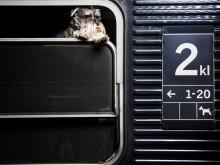 Fritt fram för sällskapsdjur på SJs liggvagnar