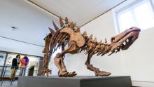 Livets historia och myllrande mångfald – ny permanent utställning på Göteborgs Naturhistoriska Museum.