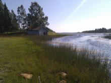 Rapport om ekologisk status för kustvikar i Umeå kommun