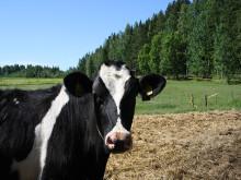 Maidontuottajan jaksaminen 24/7 työssä