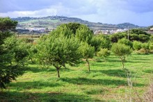 Värnar om miljön: Solresor driver trädplanteringsprojekt