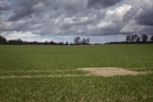Lantmännens hållbara odlingsmetod för klimat och natur ger 20 procent lägre klimatpåverkan