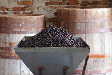 Vinskola del 12: Från källare till fat – beredning av rosévin