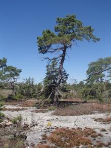 WWF: Fortsatt kalkbrytning i Ojnareskogen stort nederlag för naturvården