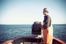 Svenska fiskekvoter för Östersjön listade