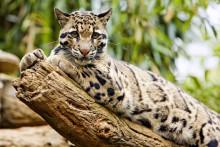 Europeiska djurparker i samarbete kring klimatet