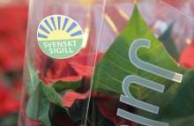 Köp Svenskt Sigill-märkt på Julstjärnans dag