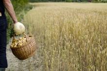 Sveriges måltidsupplevelser marknadsförs i kulinariska Italien
