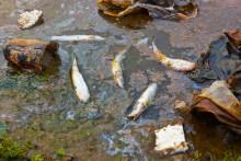Alliansens budget bottennapp för vattenmiljön