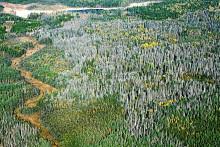 Högriskområden för barkborreangrepp hittas genom erfarenheter av Gudrun