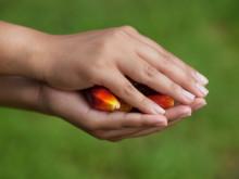 Orkla Confectionery & Snacks slutar helt att använda palmolja 2016