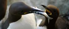 Fågelperspektiv på tillståndet i havsmiljön