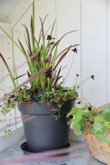 10 fina sommarplanteringar