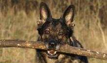 Statens hundaffärer