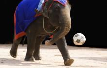 Hög tid att förbjuda vilda djur på cirkus