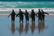 Cruise til Antarktis og Kapp Horn; Peru til høsten; Burma - en annen verden; Visste du dette om Maldivene?