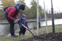 Göta kanals miljöår ger trädplanteringsrekord med över 120 nya träd