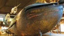 Supervalår med extra valfläsk på Göteborgs Naturhistoriska Museum.