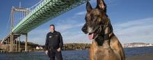 Herman är Årets polishund 2015