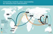Allt tydligare att global konsumtion driver regnskogsskövling