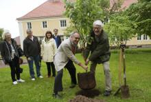 FN-lunden i Tällberg växer