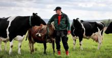 Skånemejeriers ekomjölk fyller 20 år – och ökar!