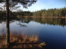 Huddinge kommun storsatsar på naturområden