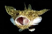 Dyk under ytan – undervattensfoto på Göteborgs Naturhistoriska Museum.