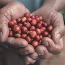 MiM-frukost 23/9: Creating Shared Value – från böna till kopp