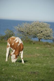 Maten som vårdar det svenska sommarlandskapet!