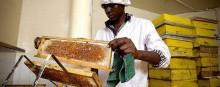 Honey Care Africa -hunajayritykselle Nestlén yhteiskuntavastuupalkinto