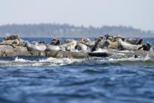 Östersjöregionen i fokus för SI under Almedalsveckan